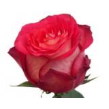 Роза Игуаза