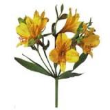 Альстромерия (желтая)