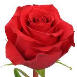 Роза Нина