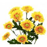 Хризантема кустовая Биатрис (желтая)