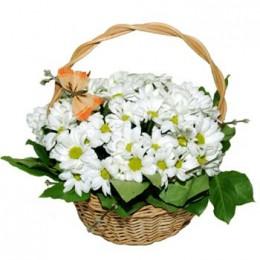 Корзина №14 (5 хризантем,  декор.зелень)
