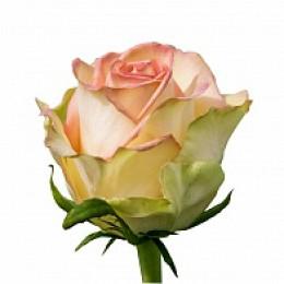 Роза Мойе